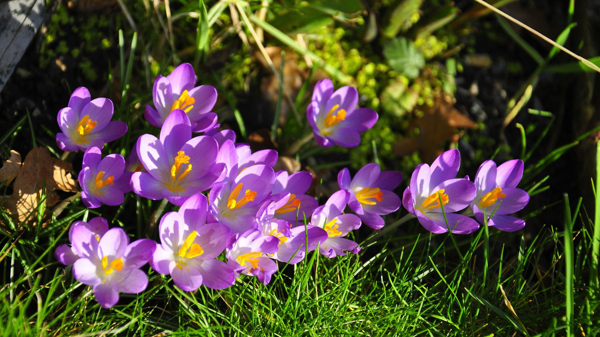 Днем, картинки на рабочий стол красивые цветы весна