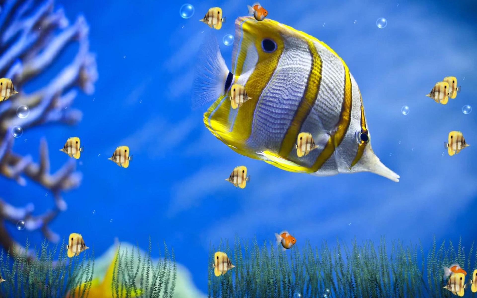 Пусть мечты, картинки на рабочий стол анимация рыбки