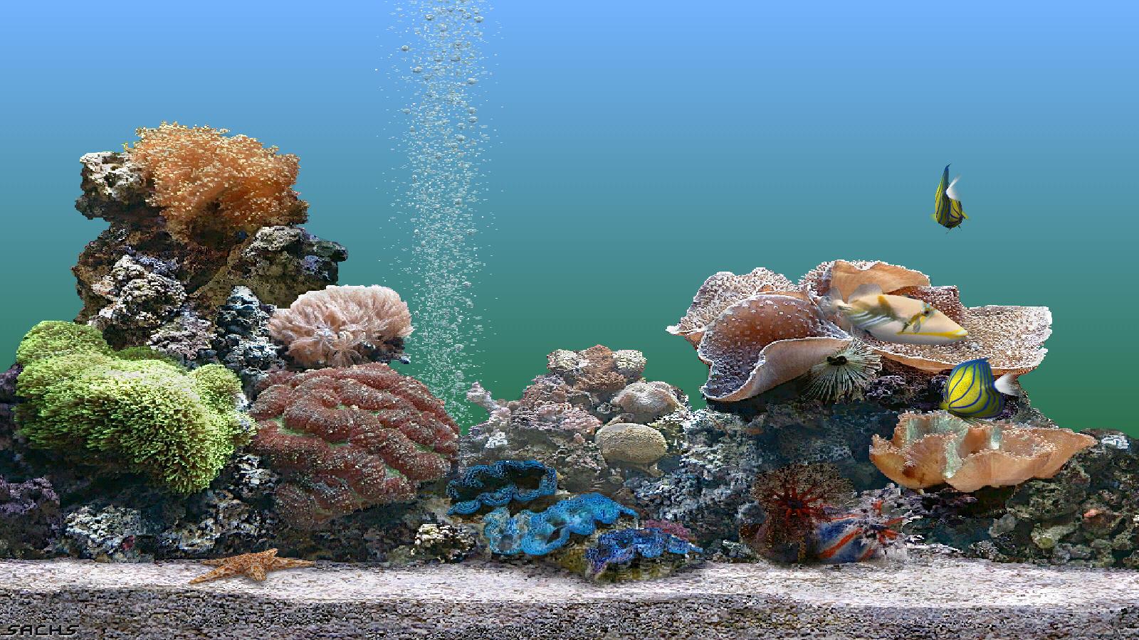 Картинки на рабочий стол рыбки живые они двигаются