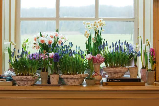 Цветы для подоконника домашние