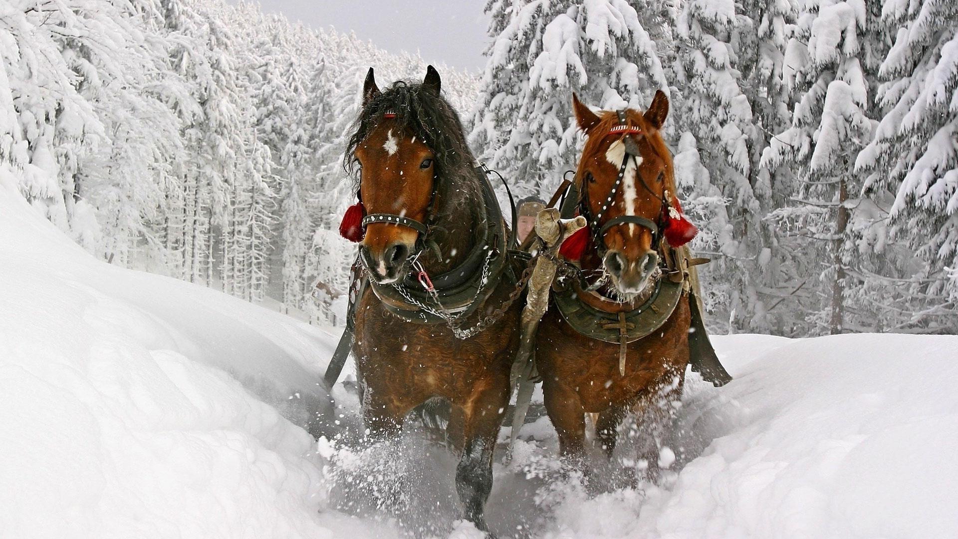обои для рабочего стола зимние лошади № 465185  скачать