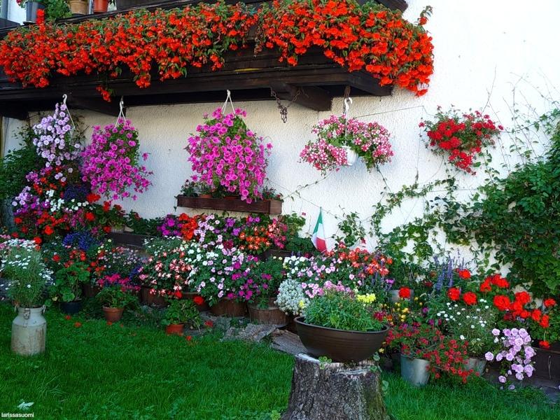 Какие цветы сажают во дворе 42