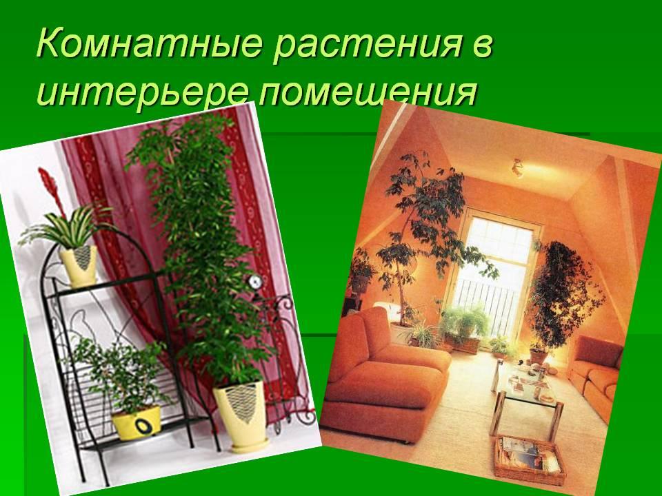 Комнатные растения в интерьере моего дома
