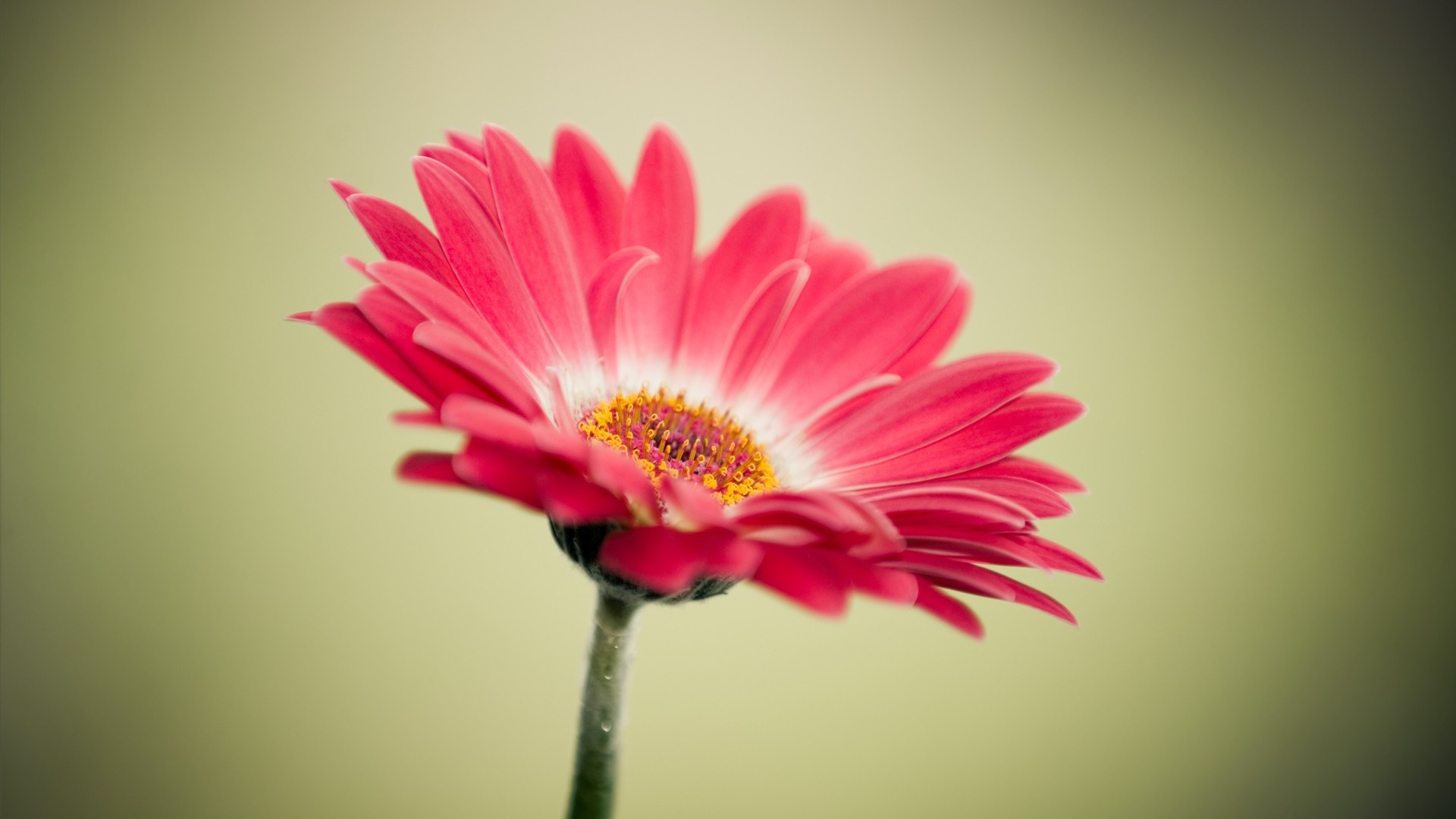 Фото на рабочий стол цветы hd