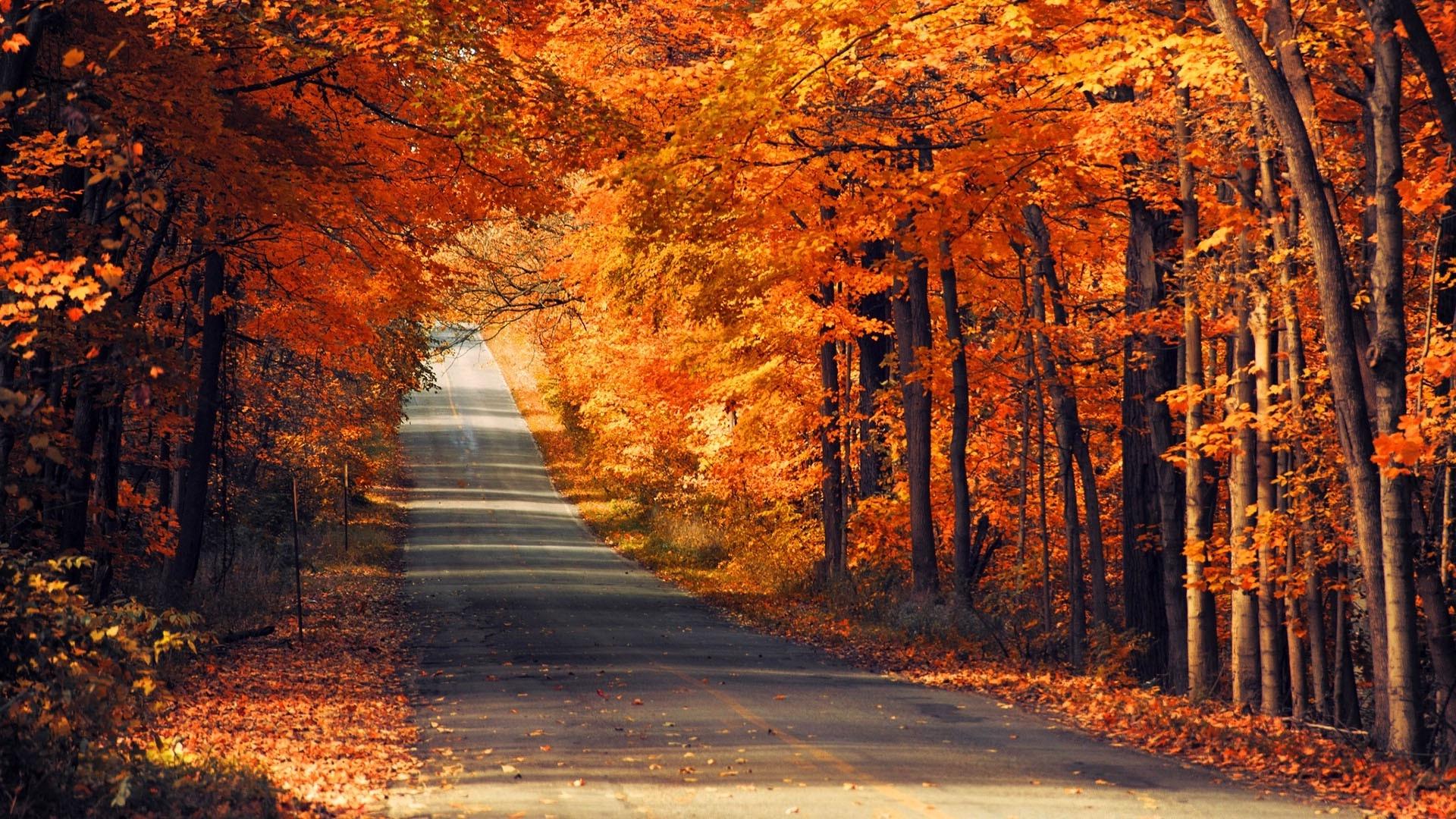 Осень картинки hd качество 7