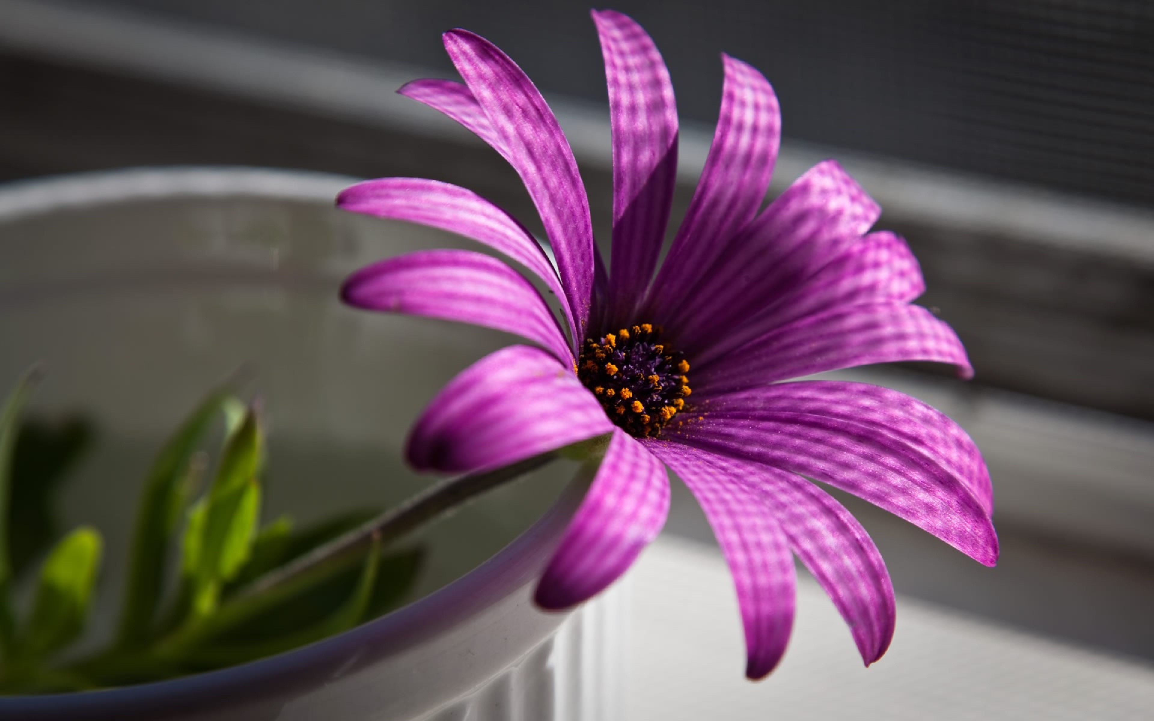 Лучшие фотки картинки цветов